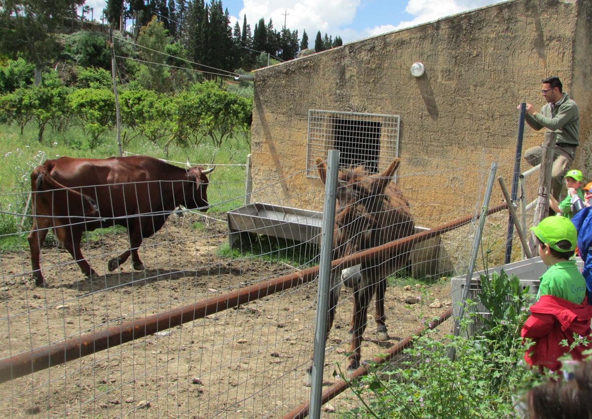 Agriturismo Carbona: the sicilian farm holiday. Siamo agriturismo e azienda didattica a Castelvetrano, Trapani, Sicilia. Vendita olio extra vergine di oliva nocellara del Belìce e molto altro.